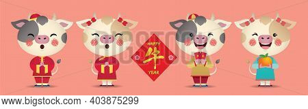 2021 Chinese New Year -  Year Of The Ox Character Design Collection. Cute Cartoon Cows Holding Red P