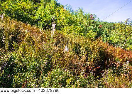 Plants By The Path To The Top Of Babia Góra In Beskid S