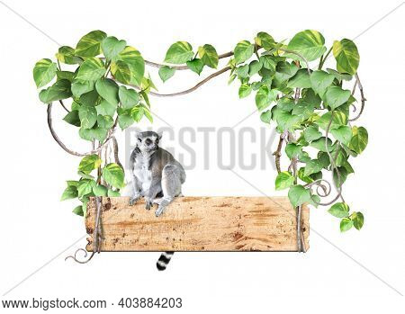 Ringtailed lemur, old wooden board, lianas and leaves of tropical plant. Jungle wood sign with liana branches and lemur catta. Isolated on white background. Mock up template. Copy space for text