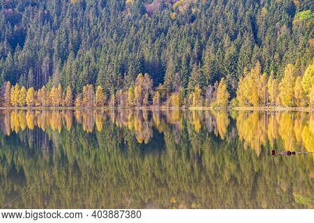Mirroring Yellow Birch Trees In A Mountain Lake, Saint Anne Lake Is The Only One Crater Lake From Ro