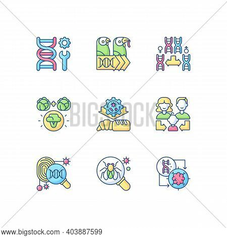 Genetics Rgb Color Icons Set. Genetic Engineering. Chromosome Division. Selective Breeding. Industri