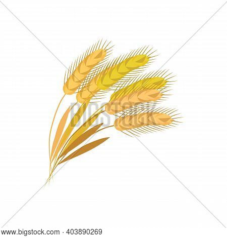 Sheaf Of Ears Of Cereals Such As Wheat Or Oats Flat Vector Illustration Isolated.
