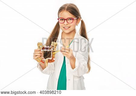 Cute Child During Learning Human Anatomy, Holds An Anatomical Intestines Model With Pathologies In H
