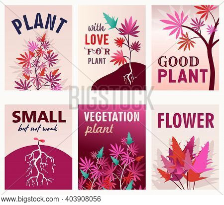 Pink Greeting Card Designs With Ganja Bushes With Roots. Colorful Hemp Postcards With Text And Brigh