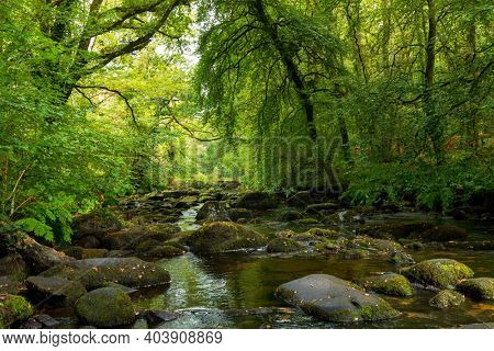 Temperate lush forest along the river, Sainte Barbe, Morbihan, Brittany, France