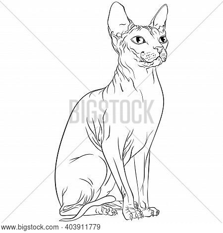 Sitting Sphynx Cat Looking To The Side. Line Art Vector Illustration Suitable For Coloring Book Page