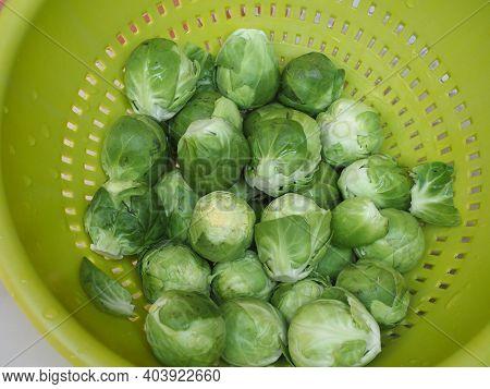 Brussels Sprouts Cabbage Vegetables Vegetarian Food (scientific Name Brassica Oleracea)