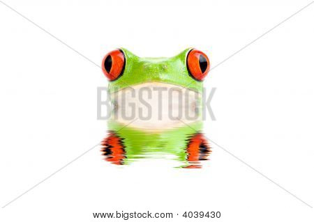 Frog Peeking Out Of Water Isolated