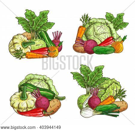 Ripe Vegetables And Greenery Food Sketch. Farming Agriculture Harvest. Pattypan Squash, Kohlrabi And