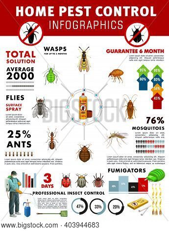 Pest Control Service Vector Infographics With Graphs And Charts Of House Pest Insects. Pie Charts, B