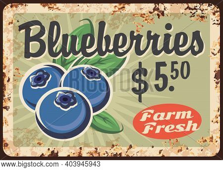 Blueberries Rusty Metal Plate, Vector Vintage Rust Tin Sign With Ripe Garden Or Wild Berries. Bluebe