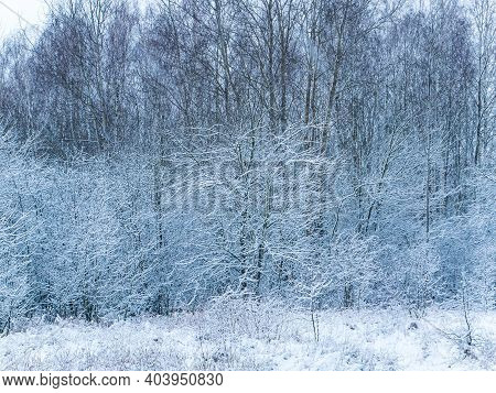 Forest Trees Are Covered With Snow Blizzards. Snow Blizzard. Forest Deciduous Trees. Winter Season.