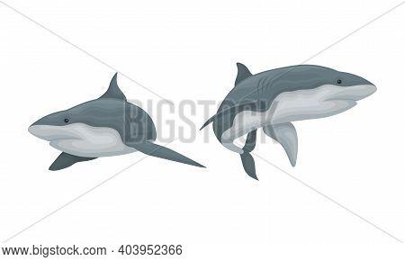Shark As Elasmobranch Fish With Pectoral Fins And Cartilaginous Skeleton Vector Set
