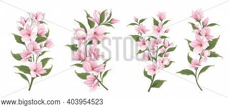 Vector Set Of Sakura Branches. Flowers On A White Background. Pink Sakura.