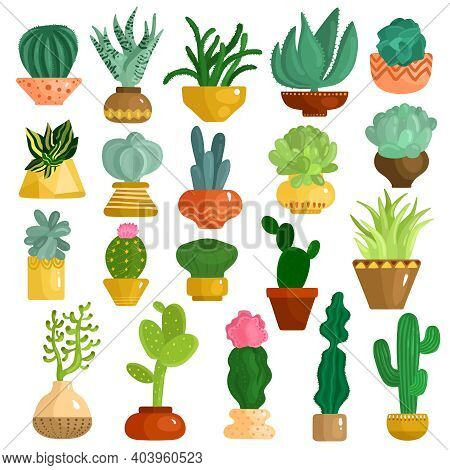 Cacti And Succulents In Pots Flat Icons Collection With Aloe Agave Kalanchoe Opuntia Euphorbia Isola