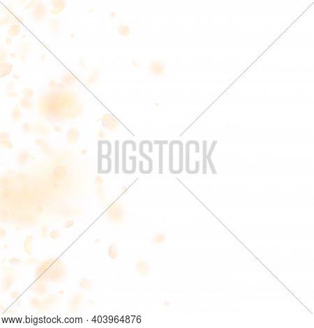 Yellow Orange Flower Petals Falling Down. Classic Romantic Flowers Gradient. Flying Petal On White S