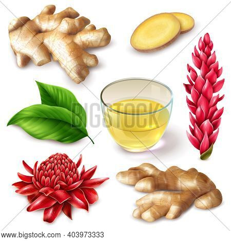 Realistic Ginger Root With Red Flowers  Spicy Set With Tea, Leaves On White Background Isolated Vect