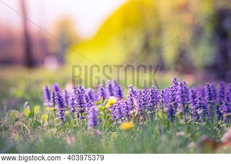 Meadow Flowers With Field And Forest Trees, Blurred Landscape Background. Vivid Spring Summer Colors