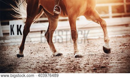 The Hooves Of A Fast, Strong Horse Galloping Across The Sand Are Illuminated By Bright Sunlight. Dre