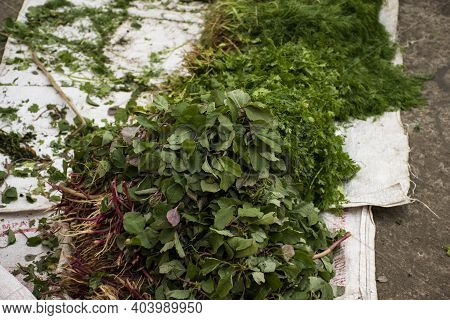 Bunch Of Fresh Green Amaranths Tricolor Vegetable , Healthy And Nutritious .
