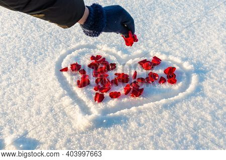 Flat Lay Rose Flowers Petals On Heart Shape White Snow, Woman Sprinkle The Petals. Heart-symbol Of L