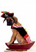 English Mastiff puppy dressed up as a pirate and sitting in a boat. Isolated on white background. poster