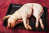 gutted Pig being killed at a farm. Pork is on a tray poster