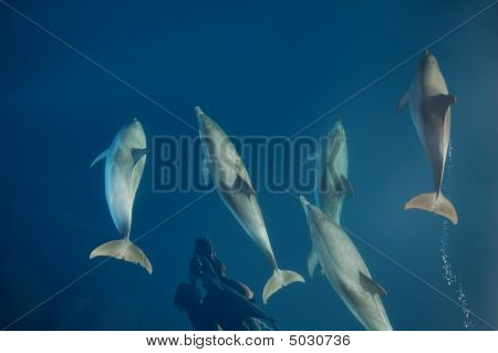 Dolphins Swimming At The Bow