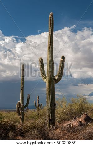 Saguaro Cactus And Storm Clouds