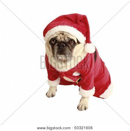 Pug Christmas Costume