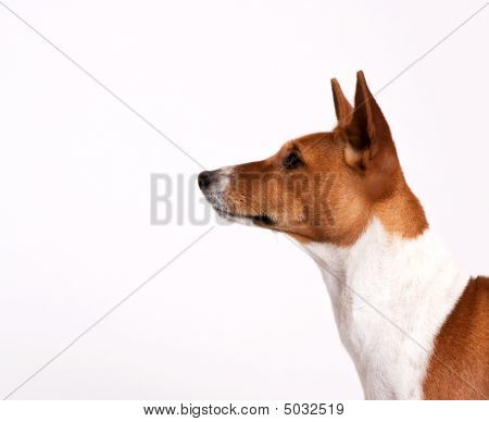 Head Of Alert Puppy