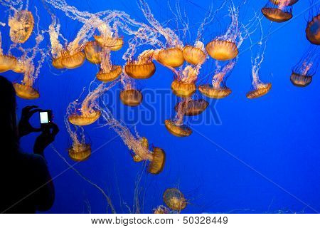 beautiful jelly fishes in the blue sea poster