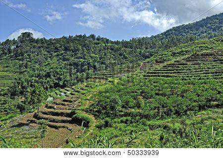 Hillside Terraced Fields