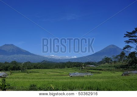 Rice Fields and Mountains