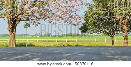 Pink Trumpet Blossom In front Of Green Field poster