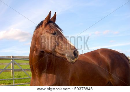 Horse head and shoulders with sky and field background.