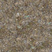 Seamless Texture of Plot Rocky Steppe Soil with Shells and Stones in the Coastal Zone, Covered with Withered Grass. poster