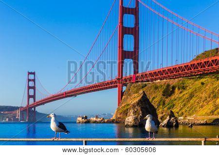 San Francisco Golden Gate Bridge seagull California USA