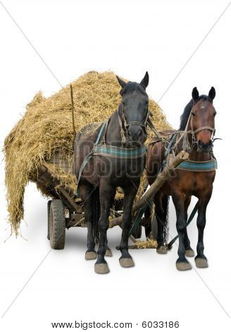 Pair Horses Isolated On White