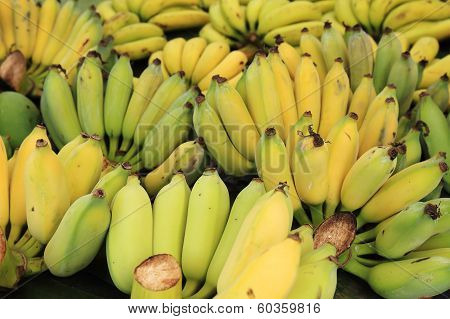 Banana Bunch Group