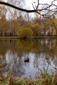 a duck on a pond in the autumn poster