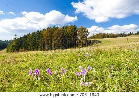 meadow in blossom, Nizke Tatry (Low Tatras), Slovakia poster