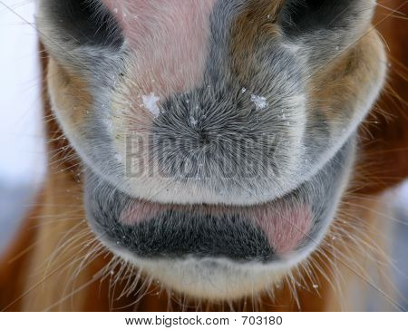 Horse Mouth