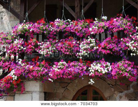 Petunia Curtain On Village Balcony