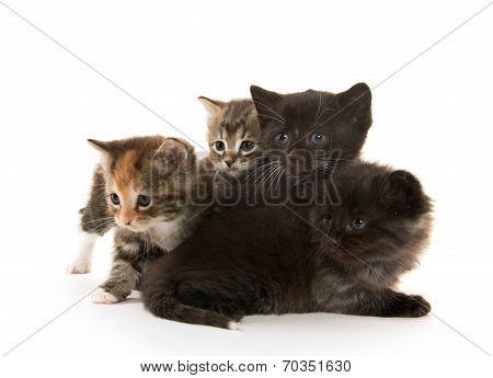 Black Cat Nursing Kittens