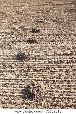 a lot of mole mound in the plowed land poster