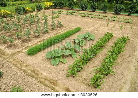 Healthy Ecological Farm