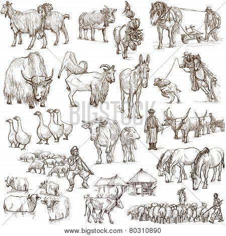 Farm Animals. Full Sized Hand Drawn Illustrations.