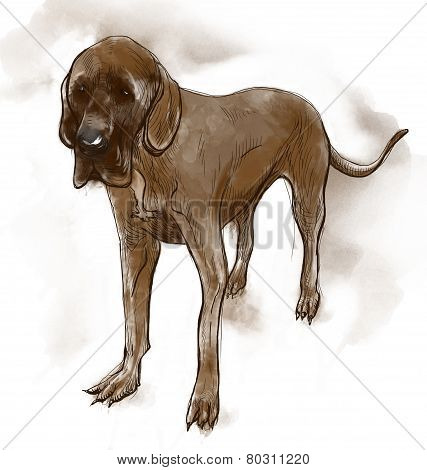 Great Dane (German Mastiff) - An hand drawn illustration. Description: Full sized hand drawn illustration (Original). poster
