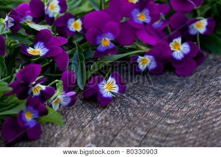 Beautiful Fresh Heartsease On Wooden Board